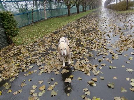 雨、嫌い・・・つーか、合羽嫌い!