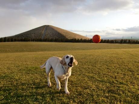 ボールだよ。