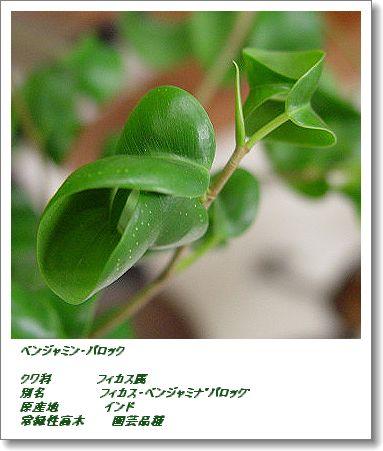350benjyamin1114ac.jpg