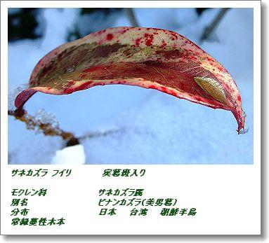 350binankazura0118dc.jpg