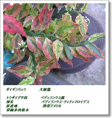 350daiginryou1108o1c.jpg