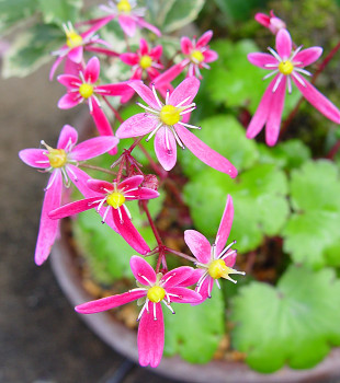 350daimonnjisou81106a.jpg