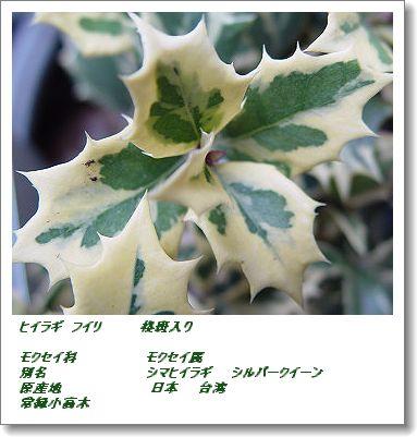 350fuirihiragi1231c.jpg