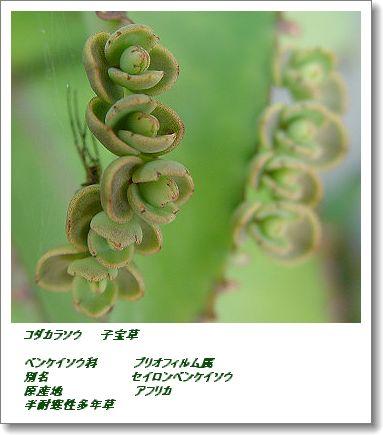 350kodakarasou1102.jpg