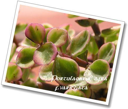 350ladiesflower80211bn.jpg