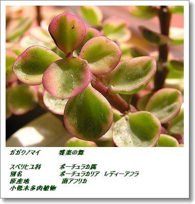 350ladiesflower80211dc.jpg