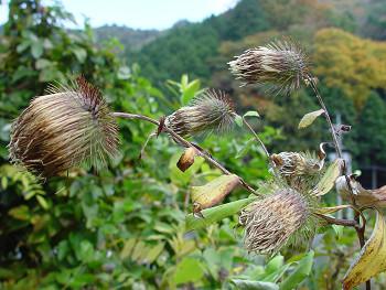 350oyamabokuchi81116e.jpg