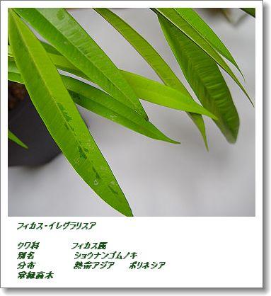 350shounangomugomu80105bc.jpg
