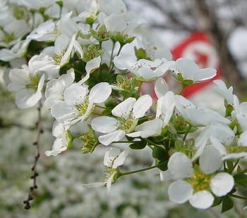 350yukiyanagi0401a.jpg