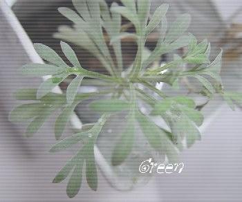 _350mokubyakou9bg.jpg