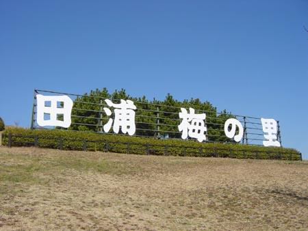 田浦梅の里に行ってきました!