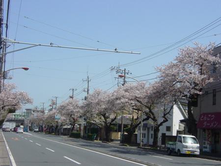 久里浜街道(新大津)