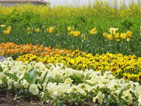 他にも色々な花がたくさん♪