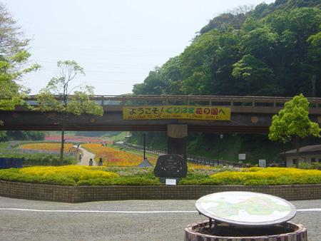 くりはま花の国・ポピー園