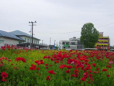 JR久里浜駅前の花壇