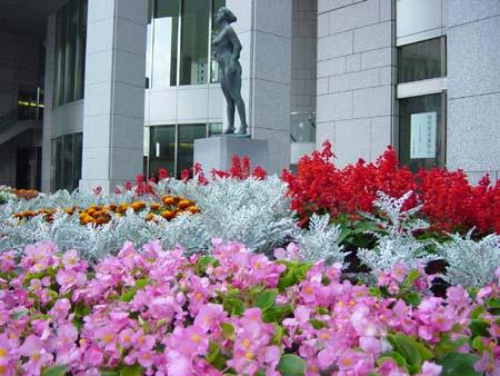 彩り豊かな花たち