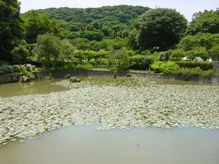 スイレン池