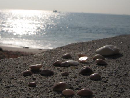 貝殻と日向ぼっこ