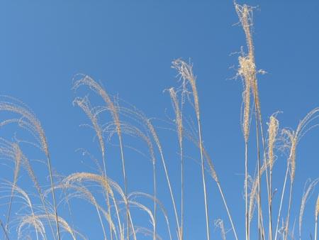 青空は自然の大キャンパス