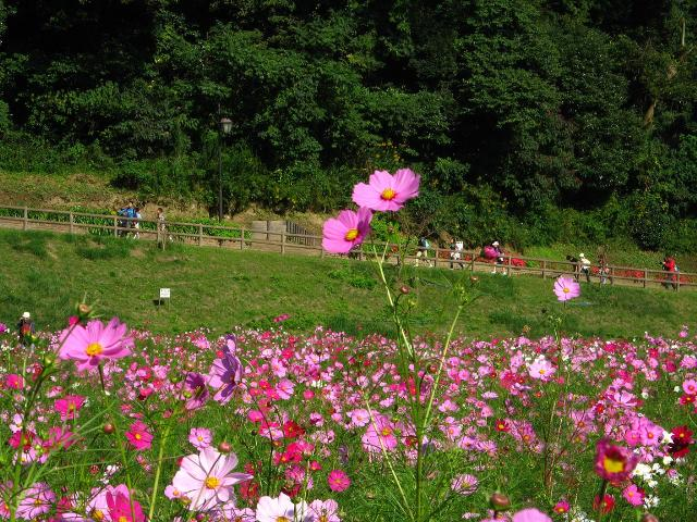hana_2008101602.jpg