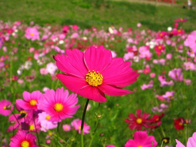 hana_2008101603.jpg