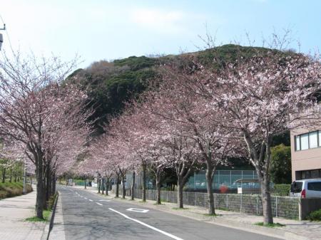 hananokuni_road.jpg