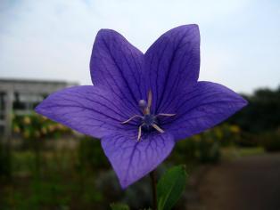 herb_garden07.jpg