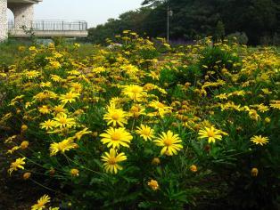 herb_garden10.jpg