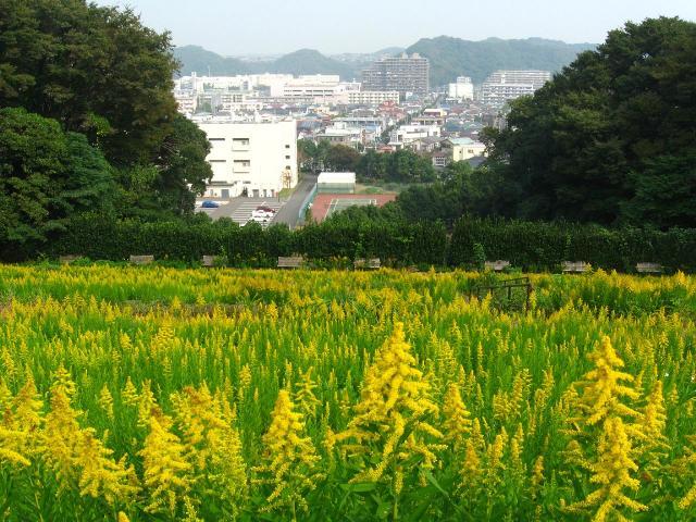 herb_garden12.jpg
