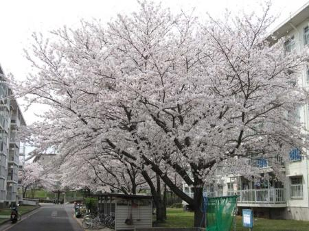 higashi04.jpg