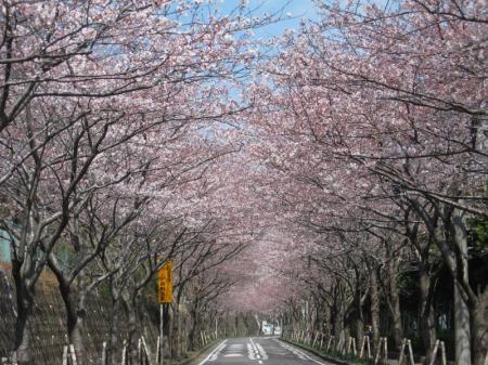 iwato_road.jpg