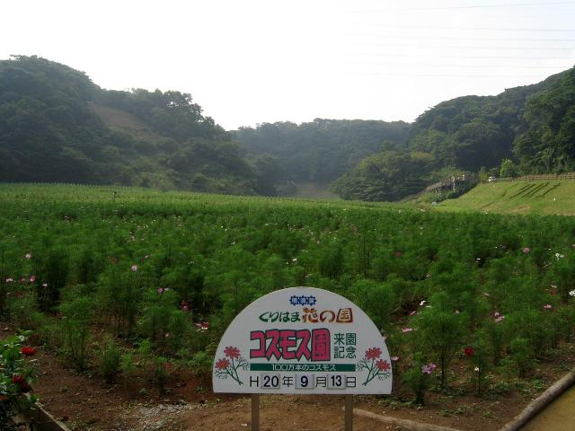 kuri_park091305.jpg