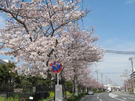 kurihama_road.jpg
