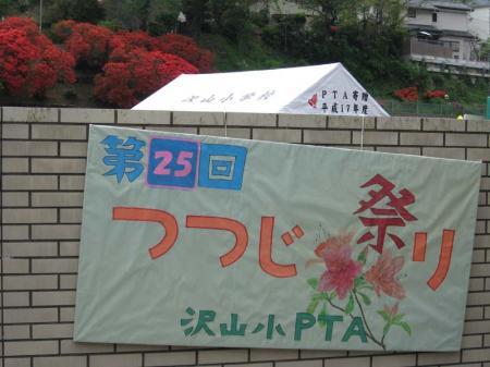 sawa_tsutsuji01.jpg