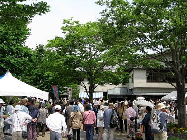 shoubu_festa01.jpg