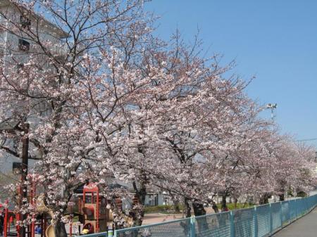sumire_park1.jpg