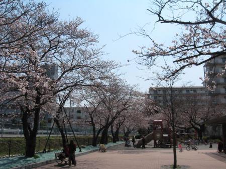 sumire_park2.jpg
