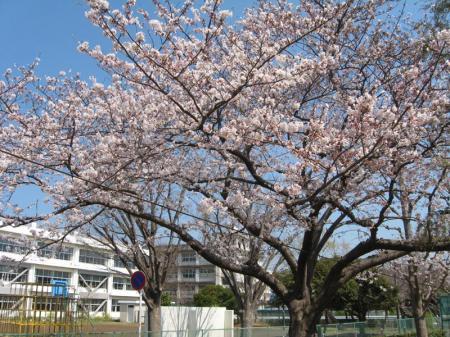 tsukushi_park.jpg