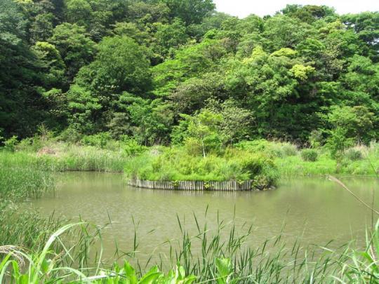 野鳥観察池
