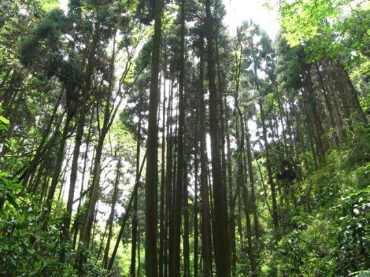 大自然の景色