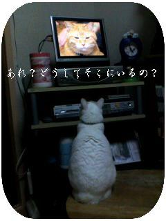 071118_1712001kakou.jpg
