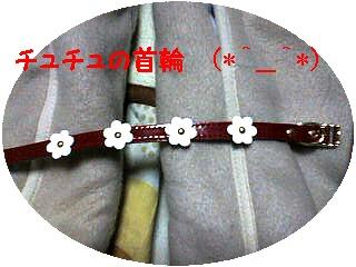 チュチュのお花の首輪