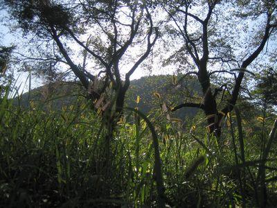 2008-10-9 b2