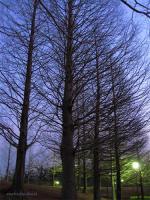 夕方のお散歩2008/02/06