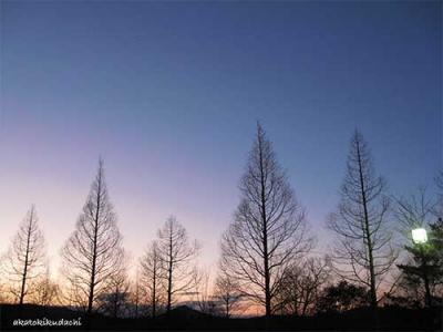 2008/03/01夕日2