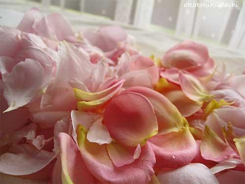ローズの花びら