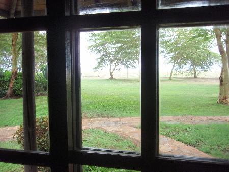 窓からサバンナ