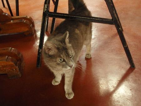 焼肉店の猫