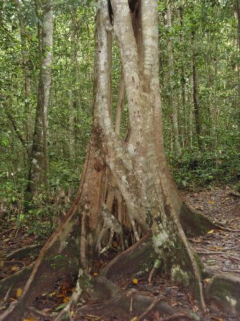 森の樹根元