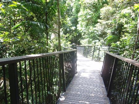 雨林遊歩道